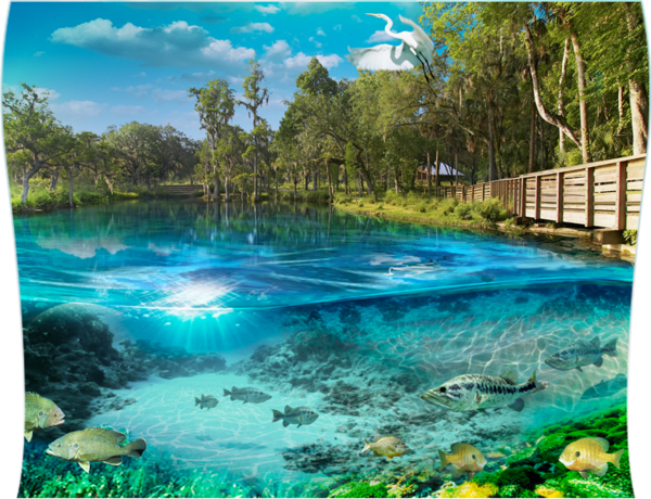 a report on make crystal springs beautiful project Crystal springs foundation has been developed as florida's premier living laboratory we take great pride in providing quality environmental education programs which.