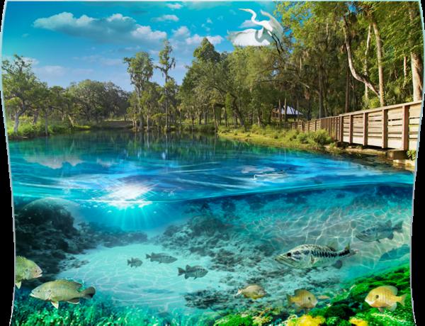 Hot Springs Spa Jacksonville Fl
